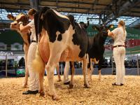 Die Tochter des Bullen Elburn RDC. Der Bulle ist ein Rotfaktortr�ger und kann sowohl Schwarzbunte als auch Red Holstein Nachkommen produzieren.