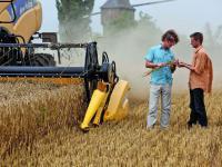 Die weltweite Weizenernte wird geringer ausfallen, aber wohl gut ausreichen.