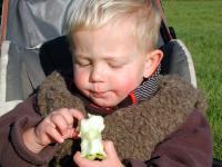 Nur in zw�lf Prozent der Kitas bekommen die Kinder gen�gend Obst.