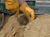 F�r die rund 750.000 Besch�ftigten in Land- und Forstwirtschaft gilt ab n�chstes Jahr an ein tariflicher Mindestlohn.