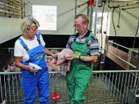 Teil des Th�ringer PRRS-Programms ist das halbj�hrliche Bestandsmonitoring. Hier macht sich Dr. Sabine Eger vom SGD in der Agrar-GmbH Deuna ein Bild vom Gesundheitszustand der Tiere.