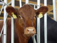 Das Verf�tterungsverbot von Tiermehl an Wiederk�uer habe ma�geblich zum R�ckgang der F�lle und zur Kontrolle von BSE bei Rindern beigetragen, meint der Chef des Friedrich-L�ffler-Instituts.