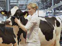 F�r die Masterrind-Auktionen in Lingen und Verden ist diese Woche Anmeldeschluss.