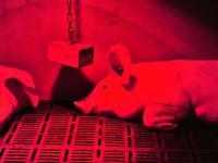 Rosige Aussichten: Am Ende der Legislaturperiode soll es den Tieren noch besser gehen als heute. Das will Bundesminister christian Schmidt erreichen.