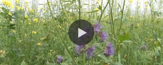 Pflanzenbau-Tipp Zwischenfr�chte