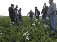 Der Anteil von Gr�sern im Zwischenfruchtanbau wird auf 60 Prozent begrenzt.