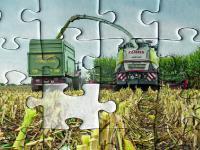 Spezialisierte Milchviehhalter mit viel Gr�nland k�nnen sich unter Umst�nden von Greening-Auflagen befreien, wenn sie weniger Mais anbauen.