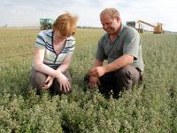 Majoranernte: Landwirte haben f�r Sonderkulturen wenige Mittel zum Pflanzenschutz zur Verf�gung.