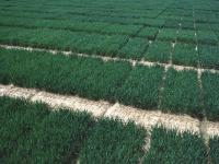 Die Pflanzenz�chtung braucht im Hinblick auf die Umsetzung des Nagoya-Protokolls laut BDP eine Speziall�sung.