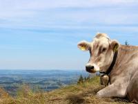 Die Aussicht auf dem Markt f�r Biomilch ist gut.