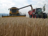 Vor allem der Weizen brachte in diesem Jahr Topertr�ge ein.