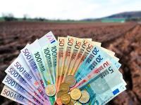 Durch die Reform der EU-Agrarpolitik werden die Direktzahlungen in Zukunft noch st�rker an �kologische Leistungen gekn�pft.