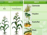 Smartphone-App: BBCH-Bestimmer