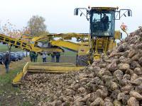 Gestern hat die Zuckerr�benernte in Niedersachsen begonnen. Die Zuckergehalte liegen bereits jetzt bei ungef�hr 17 Prozent.