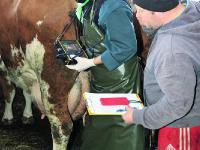 Jeden Dienstag gemeinsam im Stall unterwegs: Tierarzt Michael Schmau�er und Landwirt Michael Gschl��l.