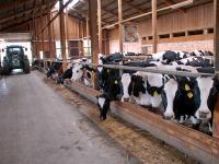 Laut DBV liegt die Milchanlieferung in Deutschland zwei Prozent unter dem Vorjahr.