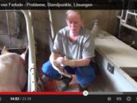 Video-Dokumentation zur Nott�tung von Ferkeln
