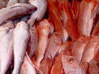 Bis 2030 wird laut Bericht zwei Drittel der weltweiten Fischproduktion aus Fischfarmen kommen.