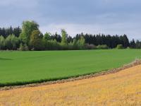 Eine mit Roundup Glyphosat behandelte Ackerbaufl�che im Fr�hjahr. Typisches Schadbild: die r�tlichbraun abgestorbenen Pflanzen.