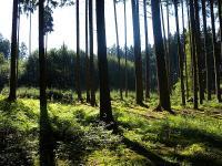 Wegen �nderungen im Erbschaftsteuer-Urteil f�rchten Waldbesitzer um ihre Ertr�ge.