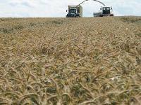 Nach Einsch�tzung der Kommission ist die Produktion von Roggen in der EU kleiner als der Verbrauch.