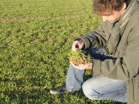 RGT Reform ist in diesem Jahr die Spitzen-Winterweizensorte.
