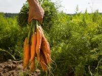 Die Pr�mien bei den wichtigsten Feldkulturen und Gr�nland will das D�sseldorfer Agrarministerium um 20 bis 45 Prozent h�her als bisher setzen.