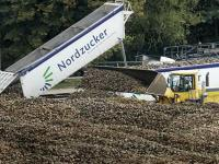 Nordzucker geht von einer guten Zuckerr�benernte 2014 aus.