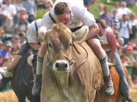 Die Preise f�r Jungbullen gallopieren davon - allerdings in die falsche Richtung. Jungbullen kosten in der Woche bis 15. M�rz 3,87 Euro/Kilo.