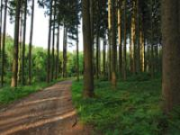 Bundeswaldgesetz