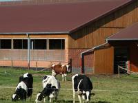 In der Rinderhaltung l�sst sich Energie besonders im Bereich der Milchviehhaltung einsparen. Melkanlage, K�hlung und Reinigung bieten hier Potential.
