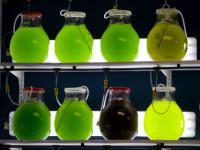 Algen-Forschung