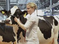Die automatisierte Rinderf�tterung und das Treffen der Spitzengenetik der Milch- und Fleischrinderrassen sind die Highlights f�r Rinderhalter auf der EuroTier 2014.