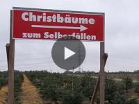 Tannenbaumproduktion