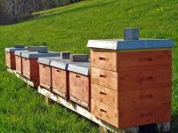Bienenst�cke (klick aufs Bild)